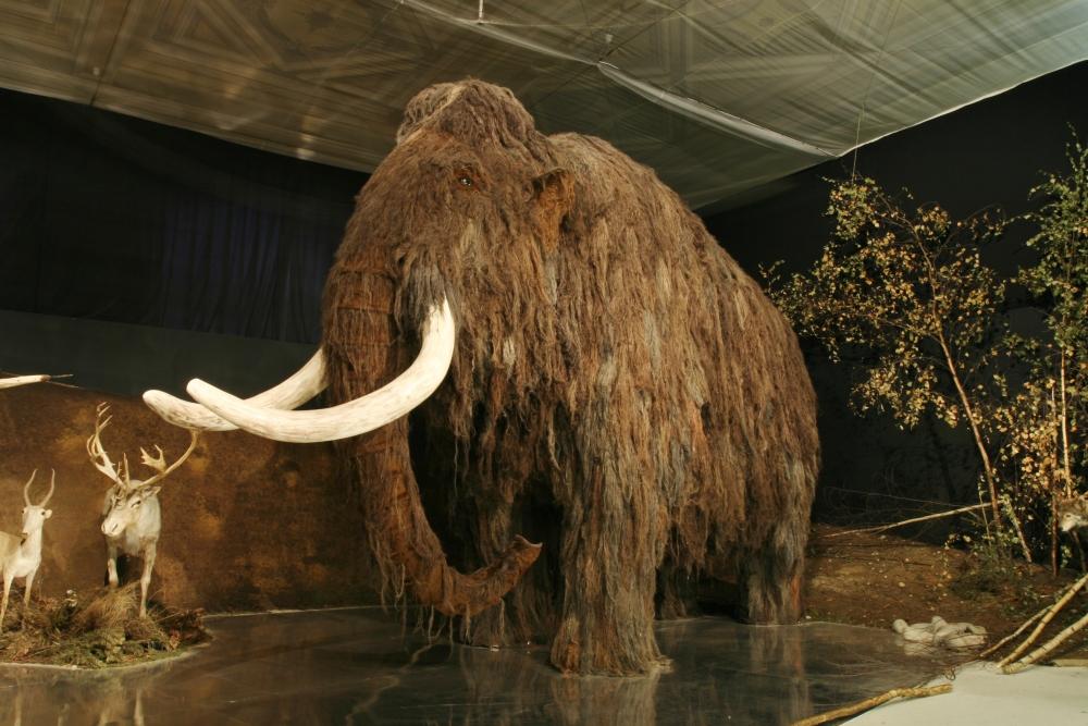 Corea del Sur y Rusia pretenden clonar al mamut